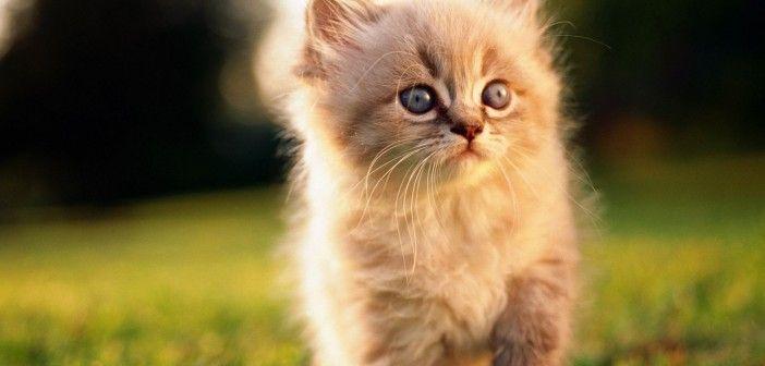 1 березня – день котів: вся правда про чотирилапих улюбленців